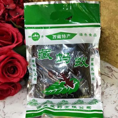 青海省西宁市城东区蚂蚁