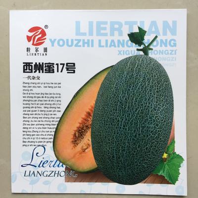 河北省沧州市青县甜瓜种子