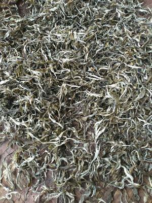 云南省西双版纳傣族自治州景洪市雨季茶 散装 特级
