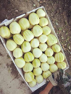 吉林省白城市镇赉县金妃甜瓜 0.3斤以上