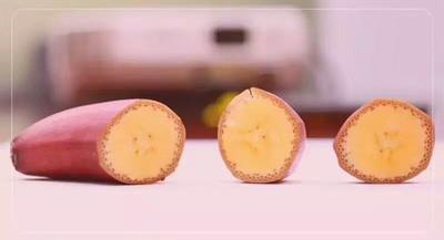 福建省漳州市平和县红香蕉 八成熟 40斤以下