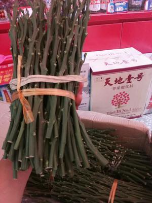 湖南省邵阳市洞口县黄金蜜柚苗