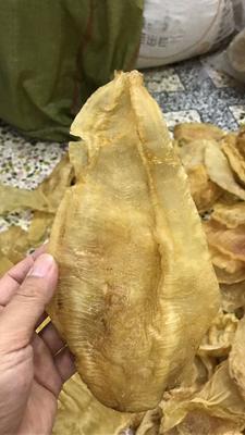 广东省潮州市饶平县鱼鳔