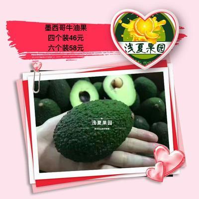 北京西城区墨西哥系(M)牛油果 150-180g