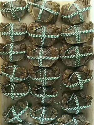 江苏省苏州市姑苏区苏州太湖大闸蟹 2.0-2.5两 公蟹