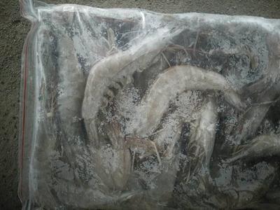 江苏省连云港市赣榆区南美白对虾 人工殖养 2钱以下