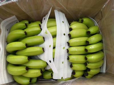 广西壮族自治区南宁市武鸣县威廉斯香蕉 七成熟 40 - 50斤
