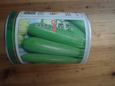湖北省武汉市武昌区西葫芦种子