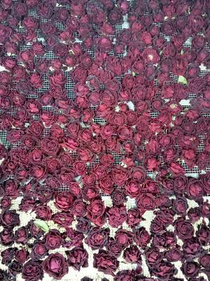 云南省红河哈尼族彝族自治州弥勒市食用玫瑰