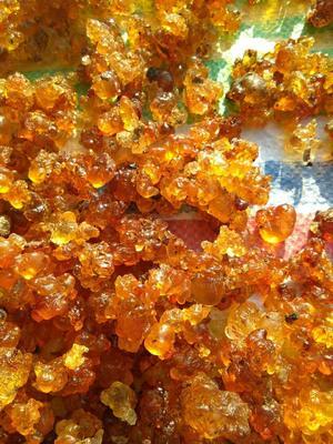 安徽省六安市金安区食用桃胶 24个月以上