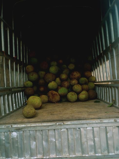 越南菠萝蜜 10-15斤
