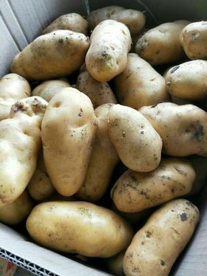 这是一张关于黄心土豆 3两以上的产品图片