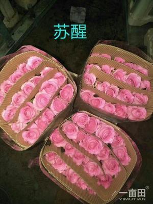 云南省昆明市官渡区卡罗拉