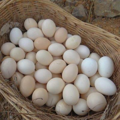 陕西省西安市雁塔区柴鸡蛋 食用 箱装