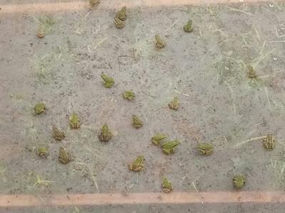 四川省遂宁市安居区青蛙