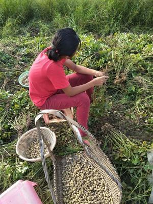 广东省梅州市大埔县咸干本地农家花生 袋装 6-12个月