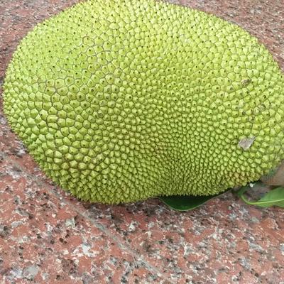 广东省茂名市茂南区野菠萝 5斤以上