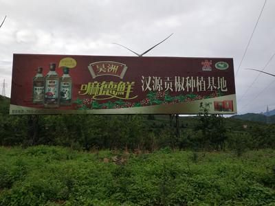 四川省雅安市汉源县汉源花椒(贡椒) 鲜花椒 特级