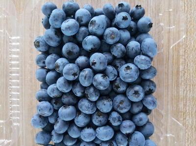辽宁省丹东市宽甸满族自治县蓝丰蓝莓 鲜果 15mm以上