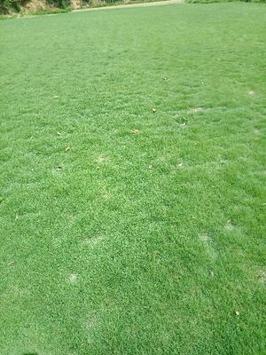 湖南省永州市东安县马尼拉草皮