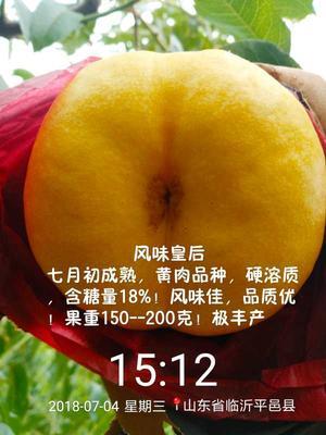 山东省临沂市平邑县风味皇后 1~1.5米