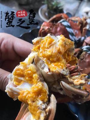 江苏省无锡市北塘区阳澄湖大闸蟹 2.0-2.5两 统货