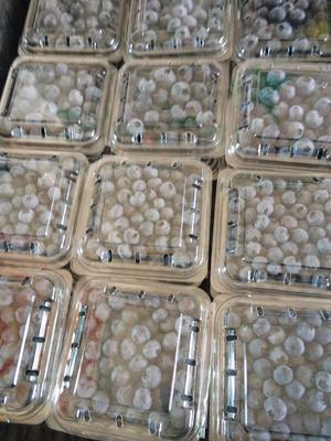 辽宁省大连市庄河市蓝丰蓝莓 鲜果 10 - 12mm以上