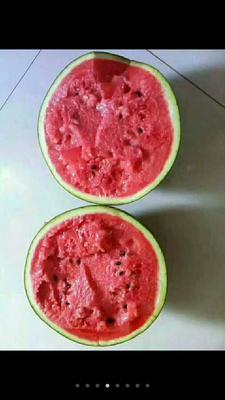 这是一张关于京欣西瓜 有籽 1茬 9成熟 10斤打底的产品图片