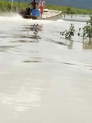 这是一张关于台山生蚝 野生 20只/龙8国际官网官方网站以上的产品图片