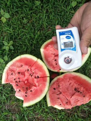 这是一张关于京欣西瓜 有籽 1茬 8成熟 10斤打底的产品图片