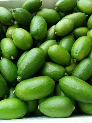 广西壮族自治区玉林市北流市香水柠檬 2.7 - 3.2两