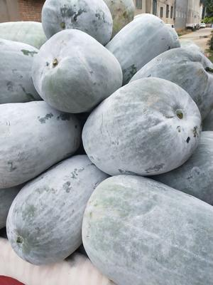 这是一张关于白皮冬瓜 20斤以上 白霜的产品图片
