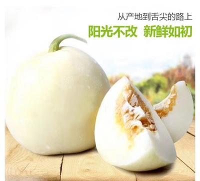 安徽省蚌埠市固镇县青皮八月瓜 种植 150g以上
