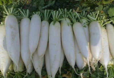 湖北省宜昌市长阳土家族自治县白萝卜 2~2.5斤