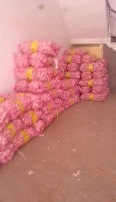 这是一张关于金杞牌大蒜 混级统货 四六瓣的产品图片