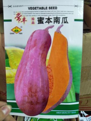 江苏省宿迁市沭阳县蜜本南瓜种子 97%