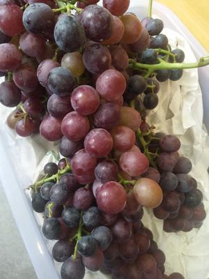 这是一张关于夏黑葡萄 10%以下 2次果 2斤以上的产品图片