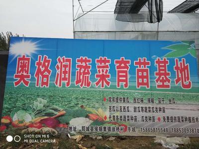 山东省菏泽市郓城县黄瓜种苗