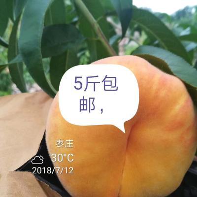 山东省枣庄市山亭区黄金毛蟠13号 3-5两