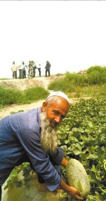 新疆维吾尔自治区喀什地区喀什市伽师瓜 7斤以上