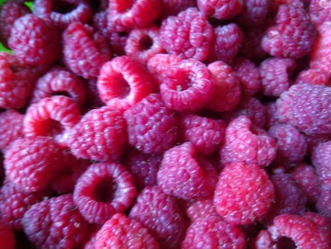 红树莓 鲜果