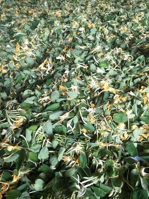 这是一张关于金银花的产品图片