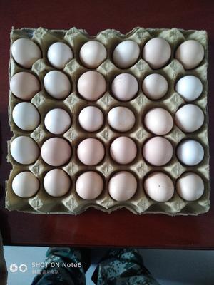 甘肃省定西市岷县土鸡蛋 食用 简包装