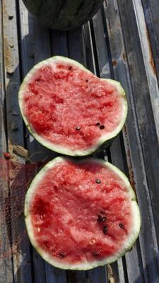 这是一张关于8424西瓜 有籽 1茬 8成熟 15斤打底的产品图片
