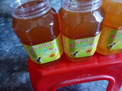 这是一张关于土蜂蜜 桶装 95%以上 1年的产品图片