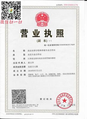 这是一张关于皇竹草种子的产品图片