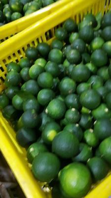 这是一张关于小青柑 4 - 4.5cm 1两以下的产品图片