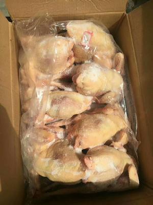 这是一张关于三黄鸡 统货 10斤以上的产品图片