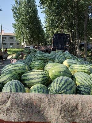 河南省周口市太康县春光六二西瓜 有籽 1茬 8成熟 10斤打底