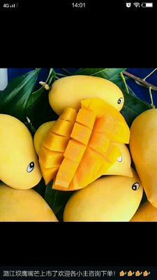 这是一张关于鹰嘴芒果 5两以上的产品图片